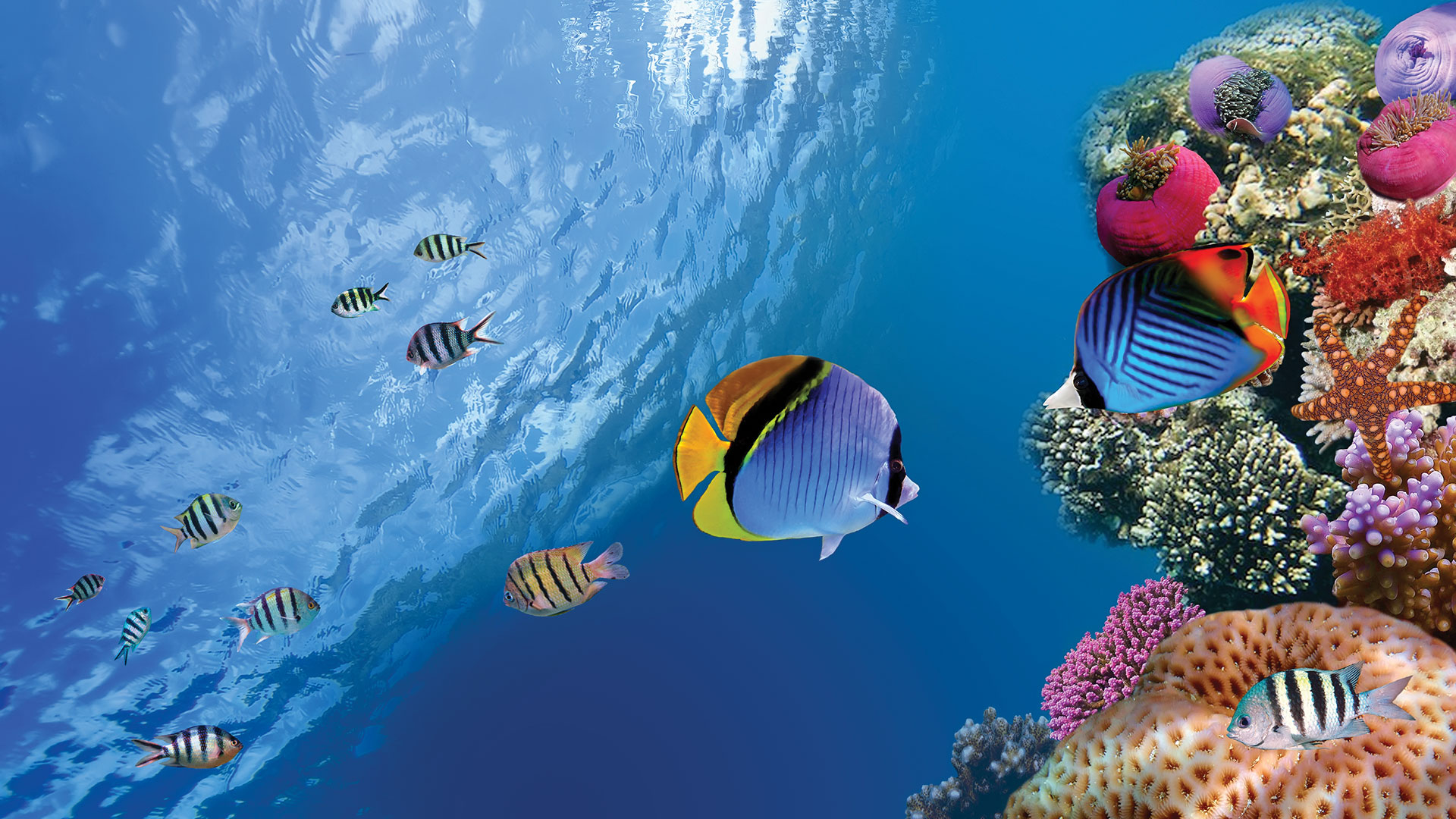 Fish in a reef